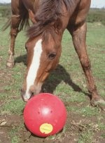 Likit Snack A Ball