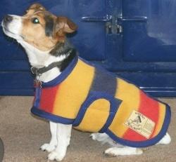 Earlys of Whitney Hundedekken